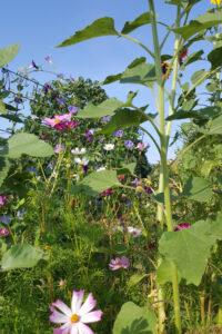 zomerse wilde tuin